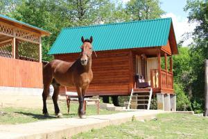 Turbaza Svetlyachok, Farm stays  Gornyy - big - 10
