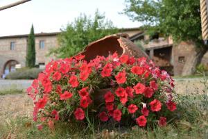 Casa Di Campagna In Toscana, Загородные дома  Совичилле - big - 77