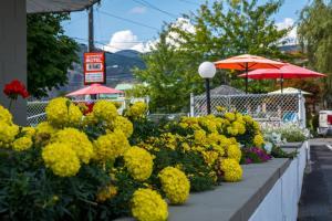 obrázek - Traveler's Motel Penticton