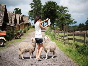 obrázek - Jeju Yangtte Farm & Pension