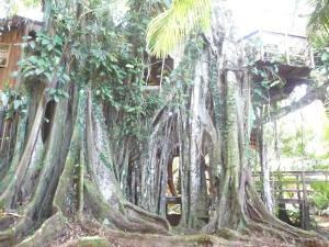 Topos Tree House