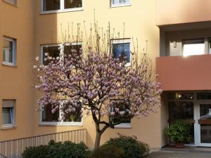Ferienwohnung am Kugelberg, Appartamenti  Gernsbach - big - 3