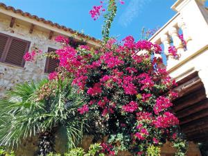Villa Can Juanito, Villen  Porto Cristo - big - 9