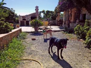 Villa Can Juanito, Villen  Porto Cristo - big - 11