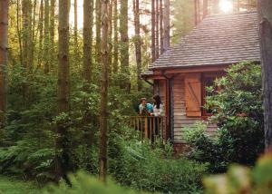 Griffon Forest