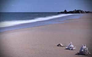 Tropicana Beach Resort & Spa, Rezorty  Long Hai - big - 32