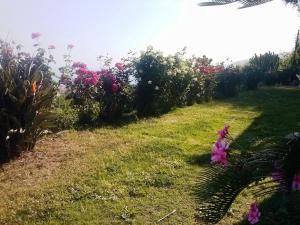 Villa Fontana, Vily  Tropea - big - 24