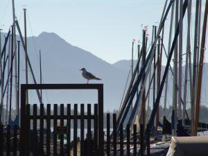 Zum Fischer am See, Pensionen  Prien am Chiemsee - big - 30