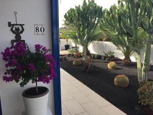 obrázek - Jardin Del Cactus