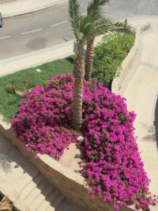 Two-Bedroom Apartment at Azzurra Sahl Hasheesh, Appartamenti  Hurghada - big - 14