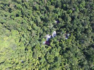 Daintree Wilderness Lodge