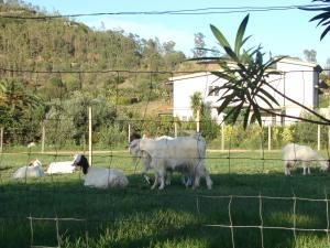 Domus Piras, Загородные дома  Кардеду - big - 45