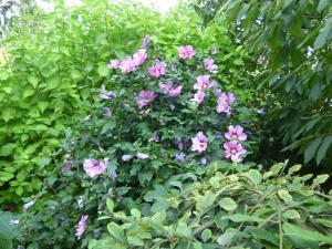bb le jardin depicure - Jardin D Epicure