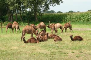 B&B De Kamelenmelkerij