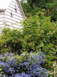 Lemonade Creek Cottages, Chaty v prírode  Lorne - big - 28