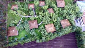 Le Bambou Gorilla Lodge