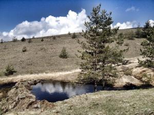 Previja Zlatibor Chalet, Chalet  Zlatibor - big - 65