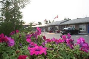 obrázek - Moonlight Inn & Suites