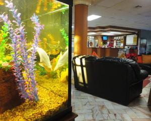 Hotel Santo Tomas, Szállodák  Ensenada - big - 37