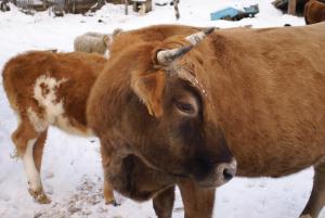 Turbaza Svetlyachok, Farm stays  Gornyy - big - 19