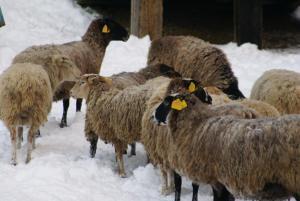 Turbaza Svetlyachok, Farm stays  Gornyy - big - 16