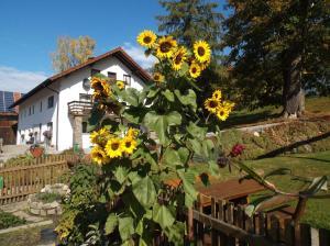 Ferienwohnung Lindenhof, Apartmanok  Sankt Englmar - big - 36