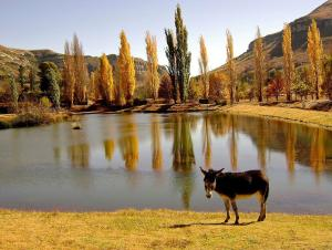 Lake Clarens Guest House, Penzióny  Clarens - big - 31