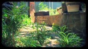 Mayak Guest House, Penziony – hostince  Haspra - big - 26