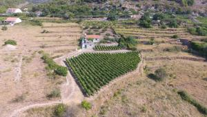 Holiday Home Vineyard house, Дома для отпуска  Бол - big - 5