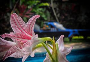 The Secret Garden Goa, Проживание в семье  Saligao - big - 30
