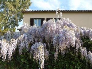 B&B L'Albero della Vita, Bed and breakfasts  Borgo Pantano - big - 32