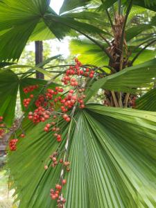The Secret Garden Goa, Проживание в семье  Saligao - big - 36