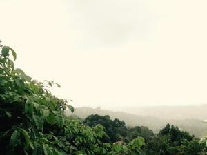 Misty Heaven