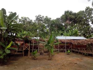 Amazon Golden Snake, Kunyhók  Santa Teresa - big - 12