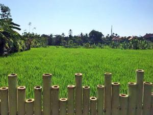 Bali Green Hostel, Ostelli  Seminyak - big - 7