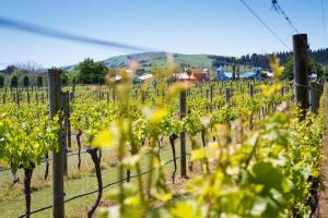 Margrain Vineyard Villas, Hotely  Martinborough  - big - 43