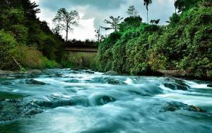 Rivertree Munnar
