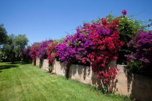 Masseria Li Foggi, Vidiecke domy  Gallipoli - big - 77