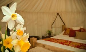 Plush Tents Glamping Hotel