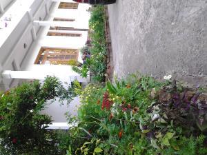 Soloman Villa