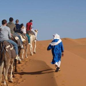 (Camp Camel Tour Sahara)