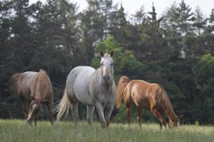 Ranch 79
