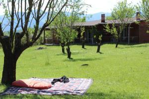Villa Rustica, Aparthotels  Konitsa - big - 6