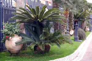 Hotel Ristorante Donato, Hotely  Calvizzano - big - 75
