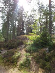 Hamgården Nature Resort Tiveden, Case di campagna  Tived - big - 30