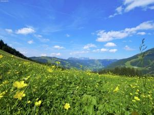 Apartment Alpensteinbock Saalbach B, Апартаменты  Залбах - big - 7