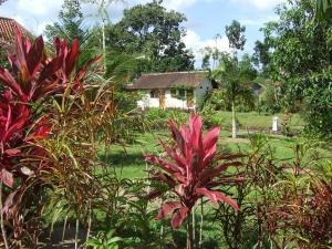 Guesthouse Rumah Senang, Гостевые дома  Kalibaru - big - 23