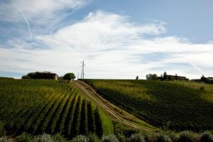 Antico Casale delle Vigne