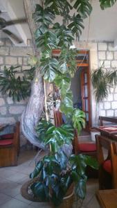 Villa Ana, Pensionen  Mlini - big - 53