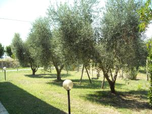 La Palma, Farm stays  Magliano in Toscana - big - 28